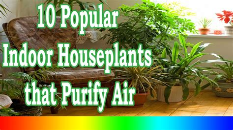best indoor plant best indoor plants 10 popular indoor houseplants that