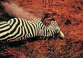 unsere afrikareise 1966 full movie underground film timeline 1960 1969 underground film journal