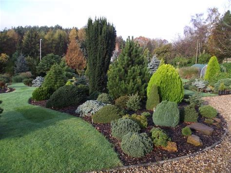 152 best images about conifer garden on pinterest trees