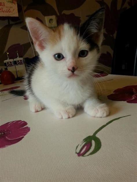 katzenbabys suchen ein zuhause katzenbabys suchen ein neues zuhause pictures