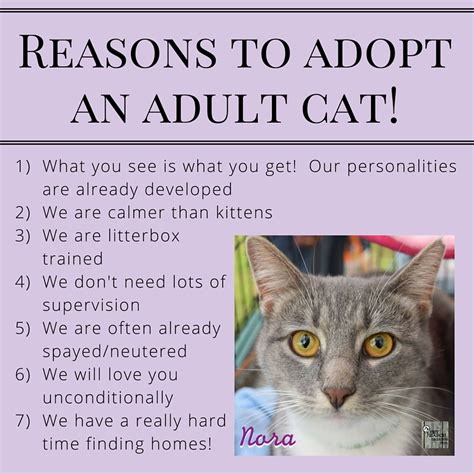8 Reasons To Adopt A Pet From A Shelter by About Adoptions Pet Search Animal Rescue And Placement
