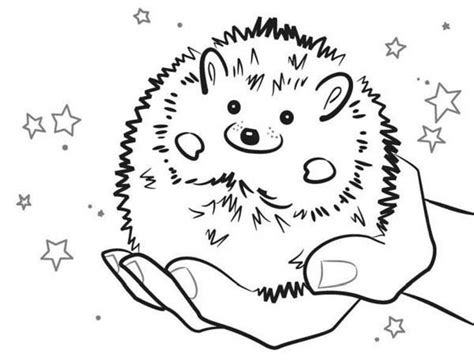 coloring page of a hedgehog baby hedgehog smiling colouring pages bulk color