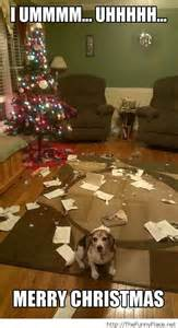 Christmas Animal Meme - merry christmas funny picture with a dog thefunnyplace