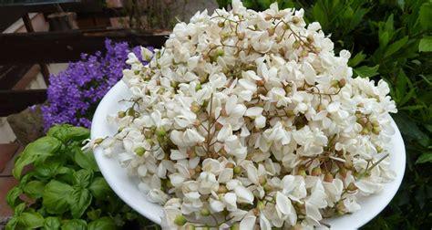 fiori di acacia fritti fiori di acacia fritti l angolo tetto