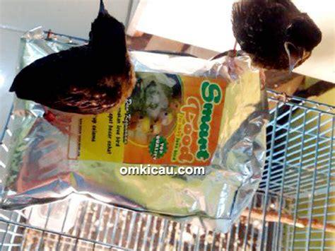 Pakan Lolohan Kacer smart food pakan lolohan untuk semua anakan burung om kicau