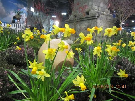 Beautiful World And A Novice Naturalist Nj Flower And Nj Flower And Garden Show