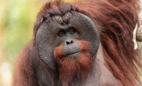 unique wild animals   indonesia