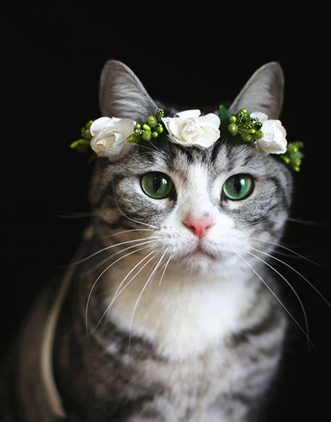 Cat Flower Crown   White Rose   SUDDENLY CAT