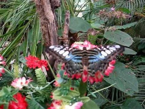 casa delle farfalle montegrotto la casa delle farfalle di montegrotto terme pd