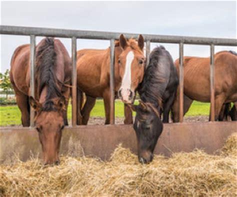 alimentazione cavallo alimentazione cavallo mille animali