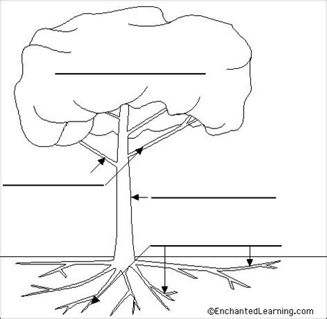 step 2 sketch and label parts of a tree food