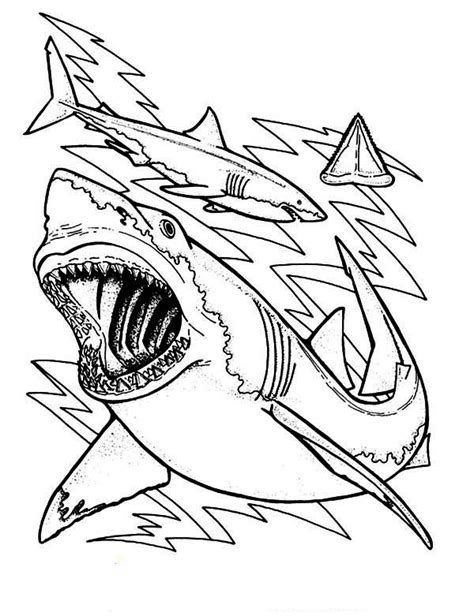 shark anatomy coloring page shark coloring pages bestofcoloring com