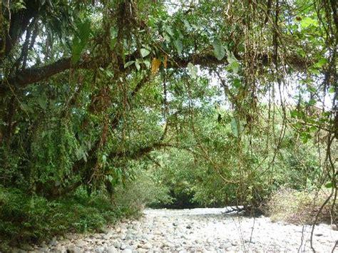 la selva tropical image gallery selva humeda