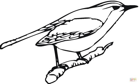 american robin coloring page american robin coloring page coloring pages
