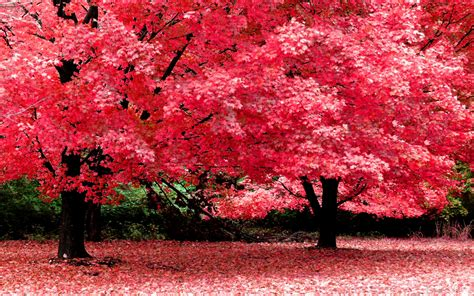 imagenes paisajes japoneses hd wallpapers hd 40 wallpapers de paisajes hd