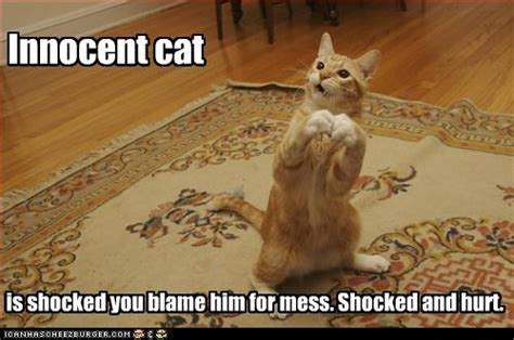Shocked Cat Meme - catching the guilty party way of cats blog