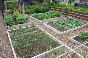Britains Best Allotment Competition   Allotment Garden Diary