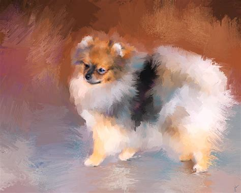 tiny pomeranians pin tiny pomeranian amazing pictures on