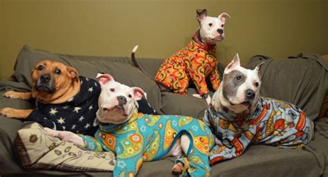 onesie for dogs 30 animals in onesies