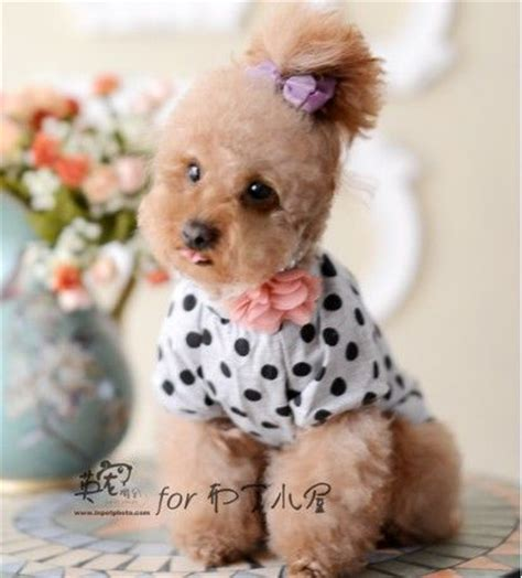puppy clothes cheap cheap dresses great ideas for fashion dresses 2017
