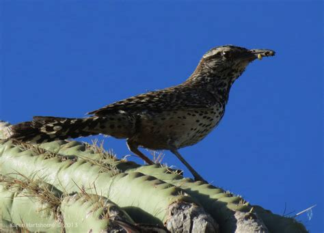 baby bird arizona bird watcher