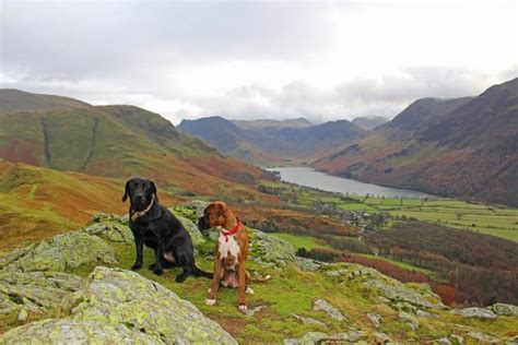 district dogs friendly lake district cottages bring your for free