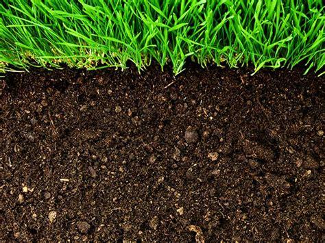 getting rid of garden pests gardening better the best gardening resource on the net