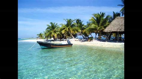 bird island belize explore tropical island wildlife at laughing bird caye