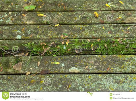 rustic park bench rustic park bench stock image image of wood lichen