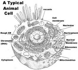 animal cell diagram coloring sheet coloring pages