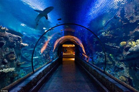 Vegas 2 Bedroom Suites As Jaws Celebrates Its 40th Anniversary The Best Places