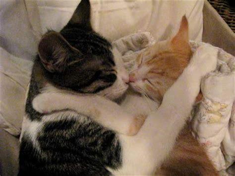 cat kiss wallpaper art of kissing animals pics