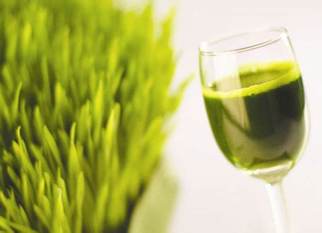 Wheatgrass Detox Liver by How To Eliminate Toxins From The Easily