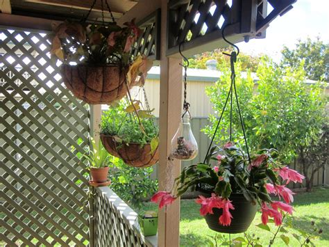 plant suggestions  hanging baskets bunnings workshop