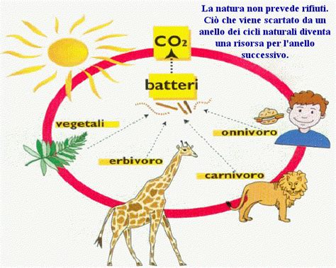 catena alimentare degli animali non dna ecosistemi naturali