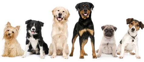 picking a puppy how to out the right breed of puppy for your lifestyle pawsitively humane inc