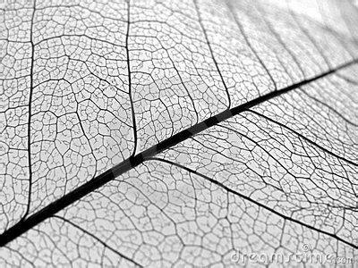 pattern leaf veins 17 best images about leaf vein on pinterest leaf ring