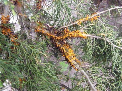 Natürliches Mittel Gegen Pilze Im Garten by Nutzen Zecken Pflanzen F 252 R Nassen Boden