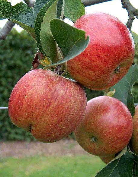 Apple Uttwiler Spatlauber   super infuse your skin with the uttwiler spatlauber apple