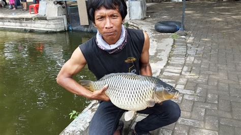 cara membuat umpan ikan mas kilo gebrus umpan ikan mas cuaca panas paling jitu