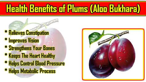 Plumb Benefits by Health Benefits Of Plums Aloo Bukhara Ke Behatrin Laabh