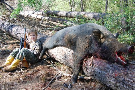 how to your to hunt hogs langley ranch the best hog in wwwtexaswildhoghunting