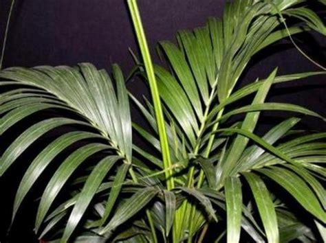 come curare le piante d appartamento giardinaggio come curare le piante da appartamento