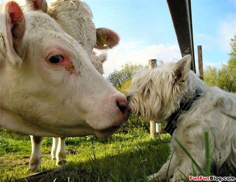 lymes disease symptoms in dogs lyme disease symptoms in dogs pictures