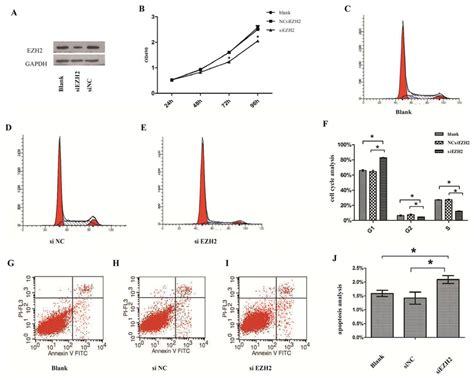 bcas2 promotes prostate cancer cells proliferation by ijms free full text role of ezh2 in the growth of