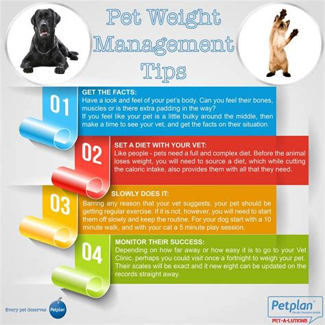 weight management for pets pet weight management tips visual ly