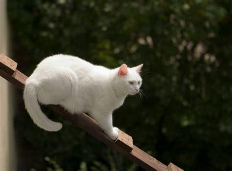 Katzentreppe Selber Bauen by Katzentreppe Selber Bauen 5 Praktische Anleitungen