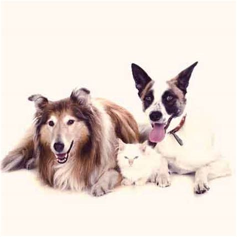 uti in dogs dogs uti infection pictures breeds picture