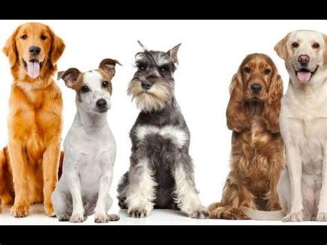 imagenes niños diferentes razas diferentes razas de perros 1 de 2 youtube