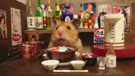 Hamster Kitchen by Ginji The Hamster Photographed In Miniature Japanese Bars